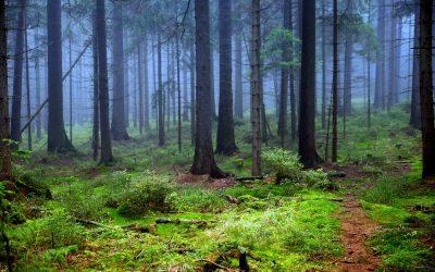 Bains de forêts